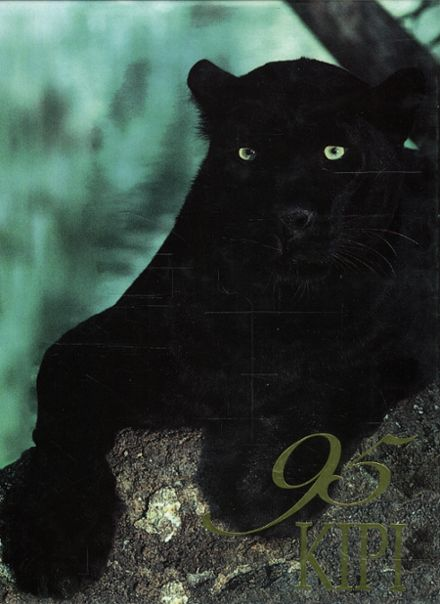 1995 Washington Park High School Yearbook Cover